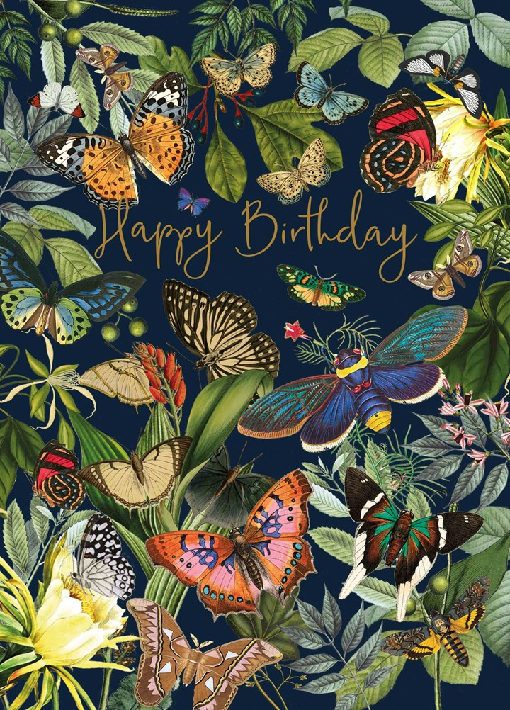 Happy Birthday Butterflies Butterfly raising kits, framed butterflies, gift shop & accessories with butterfly related items and much more! happy birthday butterflies