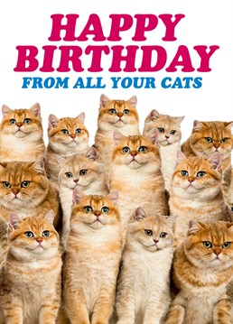 Happy Birthday From All Your Cats