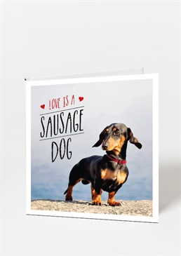 A tribute to these gorgeous dogs Proof Dachshunds are the best dogs around Great gifts for dog fanatics A great little nudge in the right direction if you're after one! We're as in love with these little waddling doggies just as much as the next person but we're gutted we don't have one. We do however, have the next best thing, Love is a Sausage Dog is not only a terrific read but also a great mood enhancer whenever you need to smile. Perhaps it's their gorgeous eyes or cute walk, or just the sheer tininess of them, but Sausage dogs are fast becoming one of the go-to family pets and it isn't hard to see why. So, whether you're trying to twist your partner's or parent's arm into buying an adorable Dachshund or just know someone who would love this book, it's the perfect time for more pictures of these cute doggies in your life. Books Letterbox Gift For Her Gifts Under A Tenner Stocking Fillers