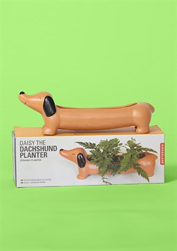 Perfect combo of sausage and greens! Pawsome gift for green-fingered dog lovers Quality ceramic and leak-free design Ideal for succulents and cacti Dimensions: 22cm x 7cm x 6cm Add some greenery and spruce up your work or home space with this adorable Dachshund Planter, perfect for sausage dog lovers and wannabe plant parents! This quirky ceramic design will be sure to put a smile on anyone's face and we can assure you that Daisy is a very low-maintenance pet – no need for walks, just keep her watered and she won't even leave any puddles, thank goodness! Cards and gifts are sent separately. View our Delivery page for more details on Gift processing and delivery times. New In For Her Home Decor Self Care Novelty Gifts