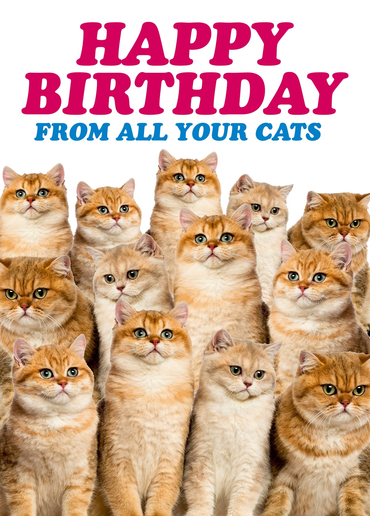 Happy Birthday From All Your Cats Zoomed Image Hover To Zoom